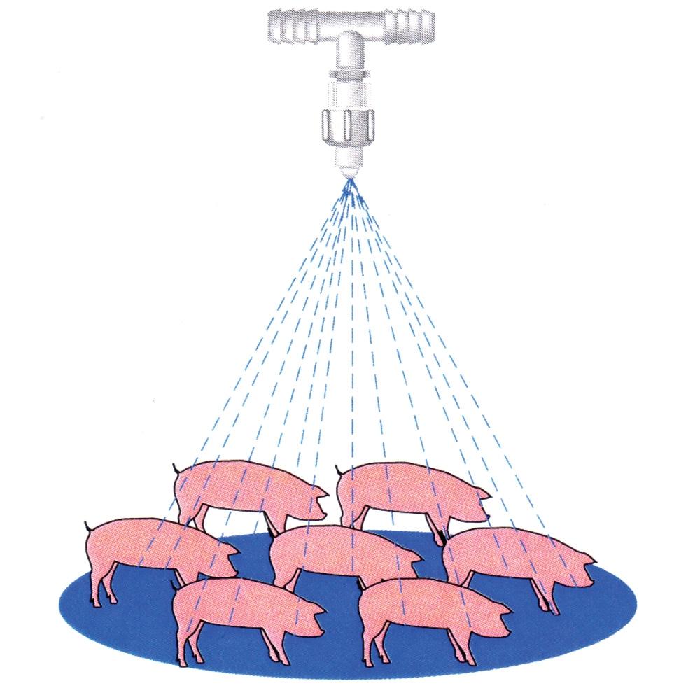 Hog Cooling