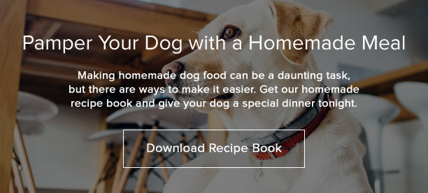 The best dog food for big dogs what to look for download your free homemade dog food recipe book forumfinder Gallery