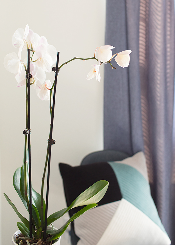 Orchid Bloom Loss Is It Normal