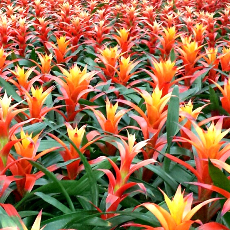 8 Interesting Facts About Bromeliads
