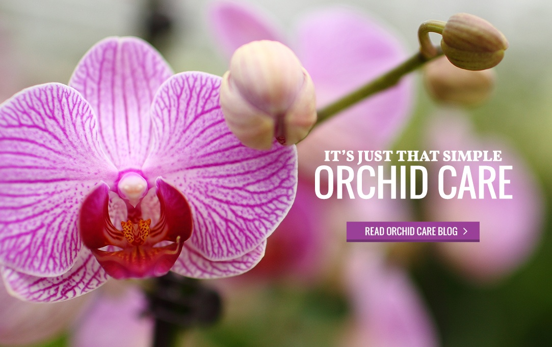Orchid Care Blog