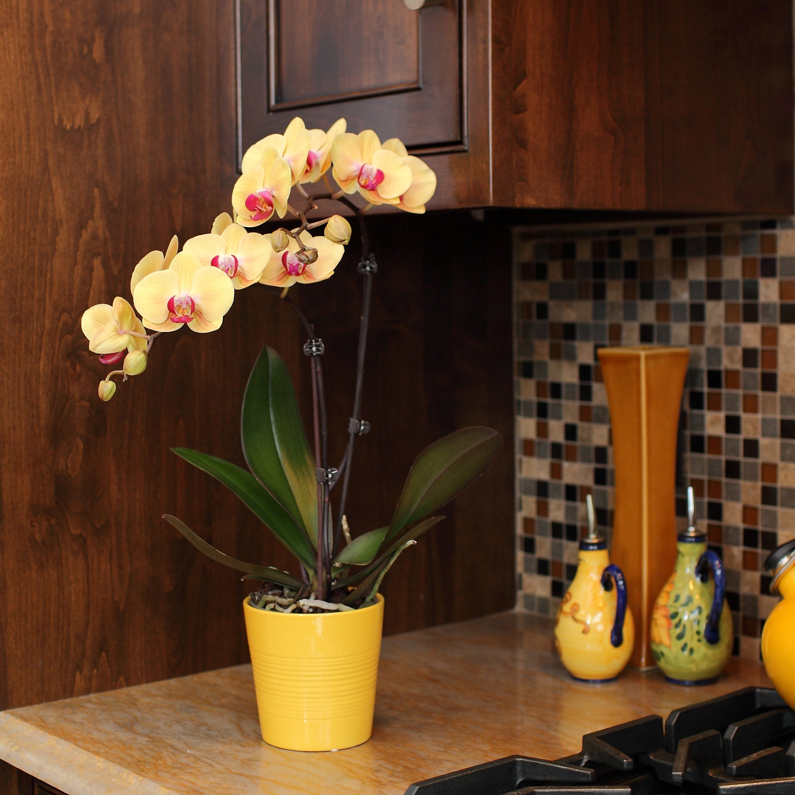 Selling potted indoor plants vs fresh flowers - Indoor potted flowers ...