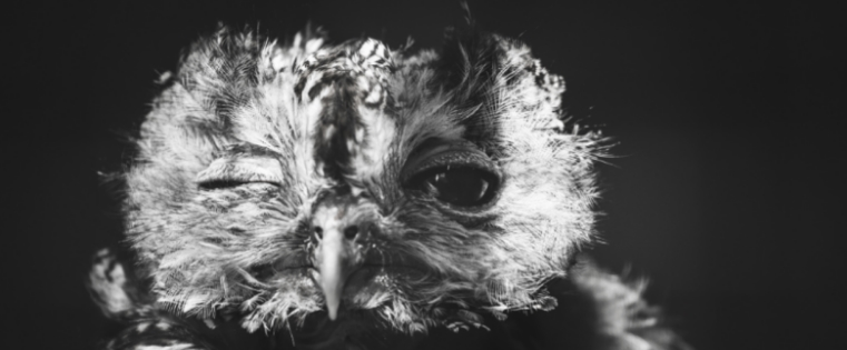owl-080835-edited