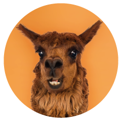 Alpaca-office-pet.png