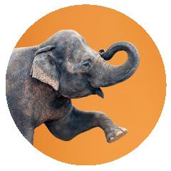 Elephant-office-pet.png
