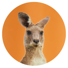 Kangaroo-office-pet.png