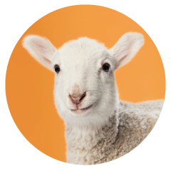 Sheep-office-pet.png