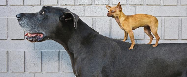 big_dog_small_dog.jpg