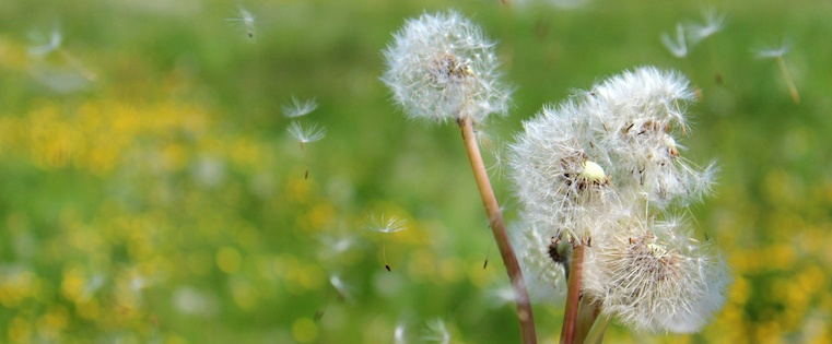 dandelion-blowing.jpeg