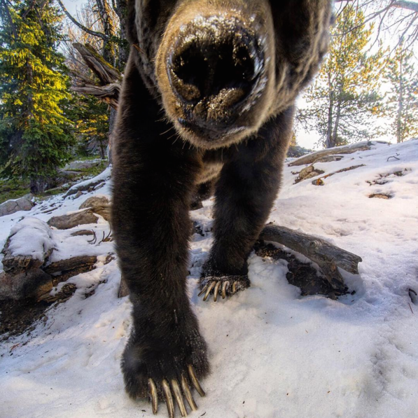 national-geographic-instagram-1.png