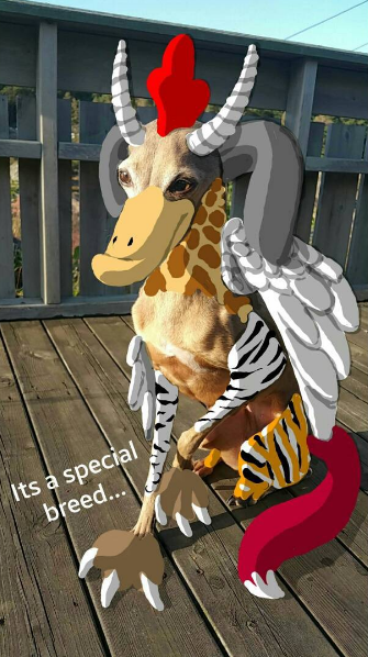 special-dog-breed-snapchat.png