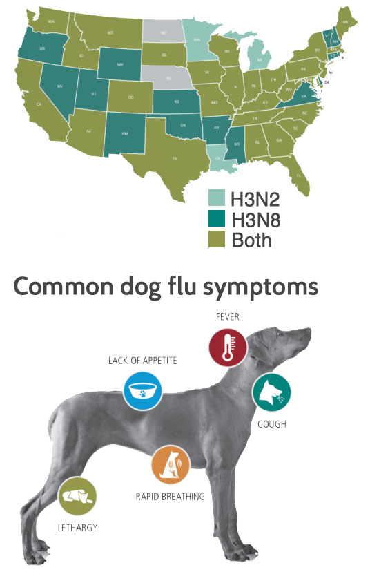 Can U Get The Flu From A Dog