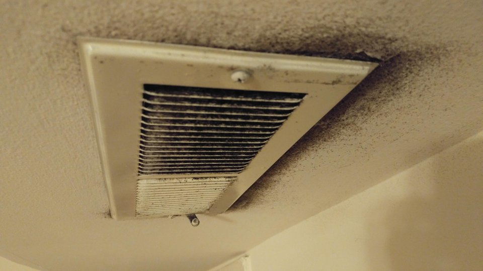 How to Get Rid of Black Mold in Your Home for Good