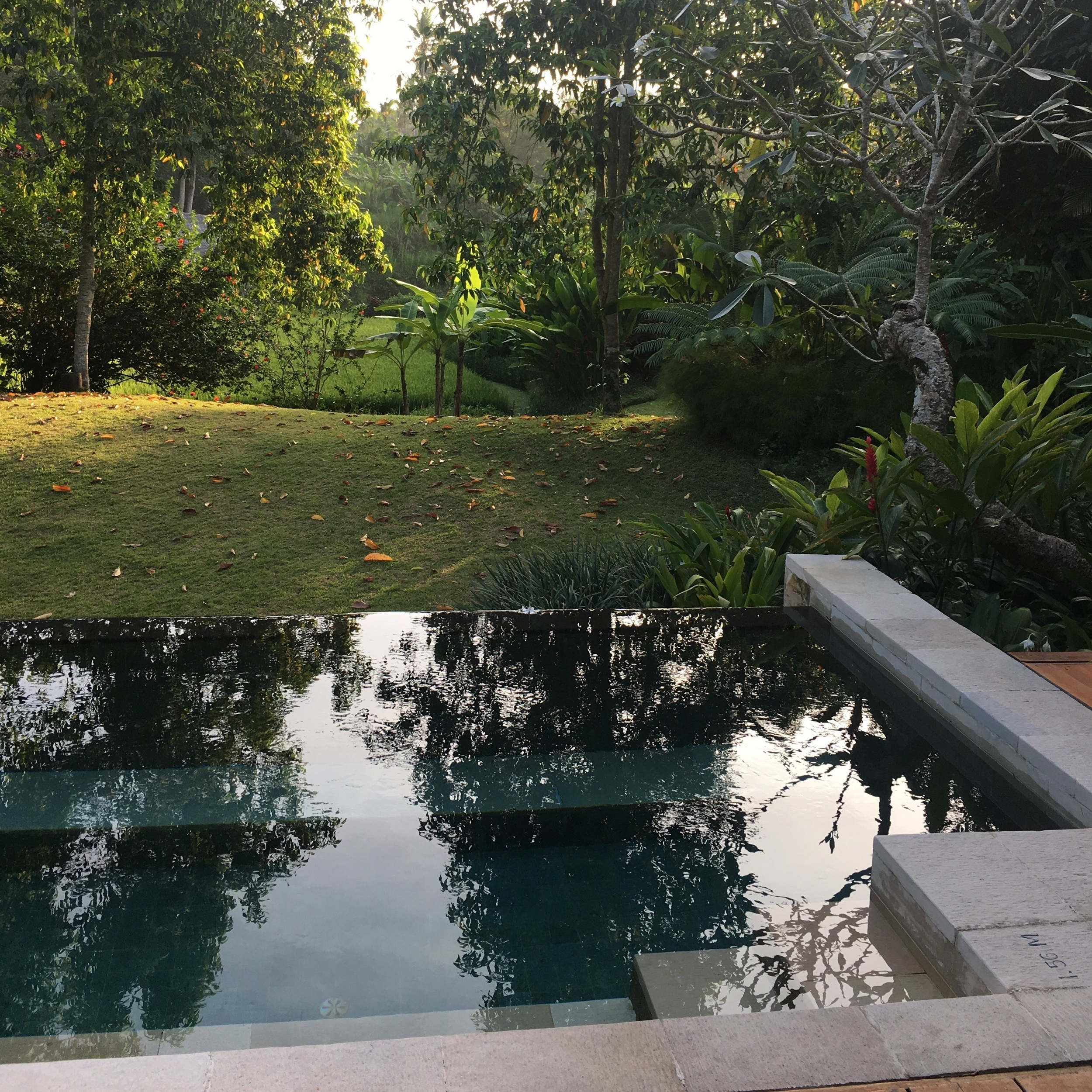 Peaceful jungle view: the pool in front of our villa at Four Seasons Sayan