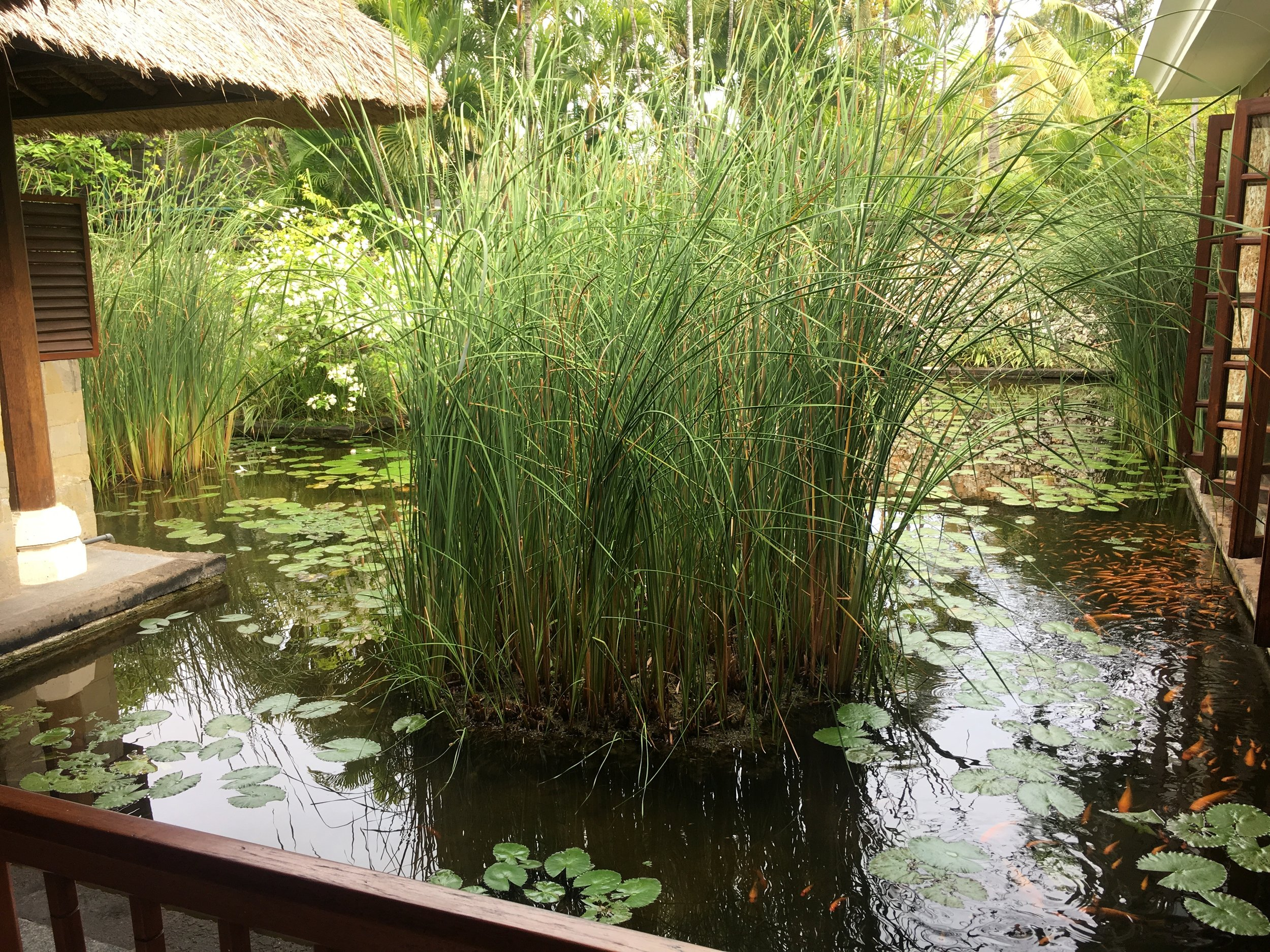 The lily ponds at the Oberoi Spa