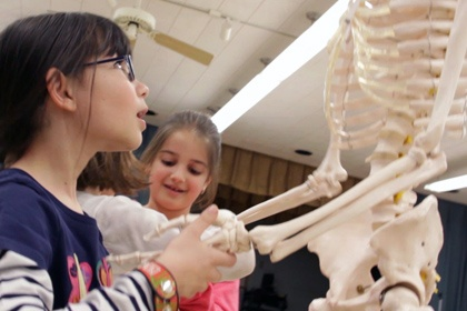 Explore a human skeleton at Kidz Science Safari - STEM for Kids