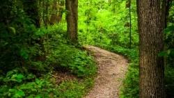 Trail through lush green forest in Codorus State Park, Pennsylvania.-040374-edited250x141.jpeg