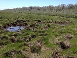 flooded_salt_marsh_pan_Nantucket_Mosquito_Larval_Habitat_250.jpg