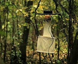 mosquito_trap