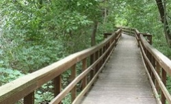 wooded-path-250x152-blog
