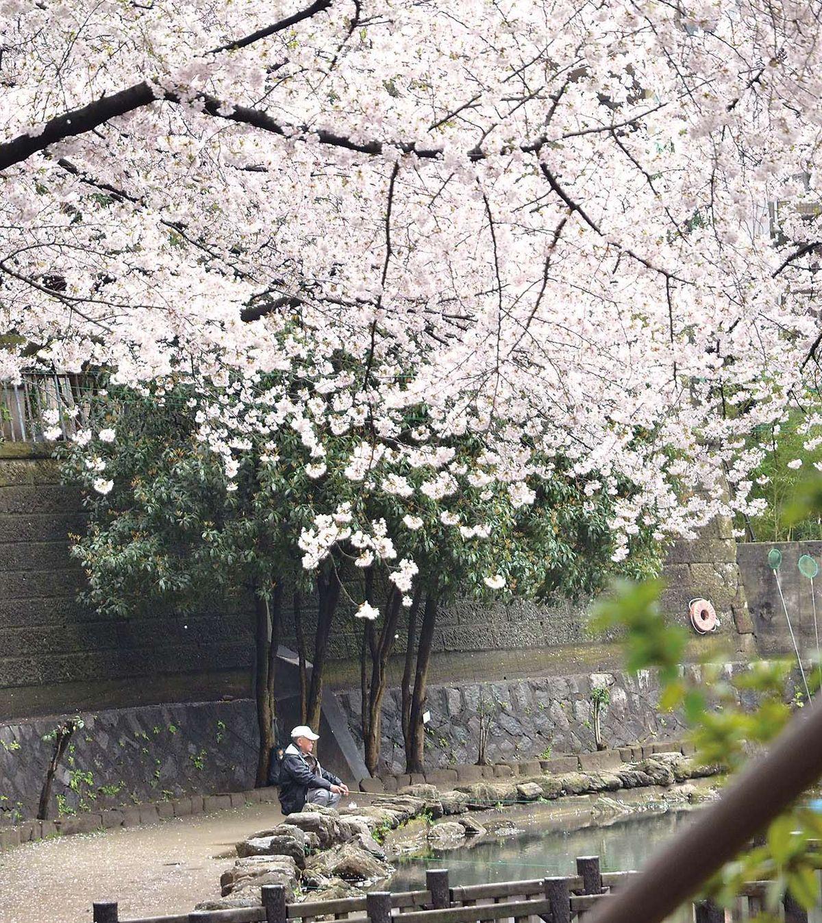 031-035ohanami_tsuriba_cs6 (6)_1