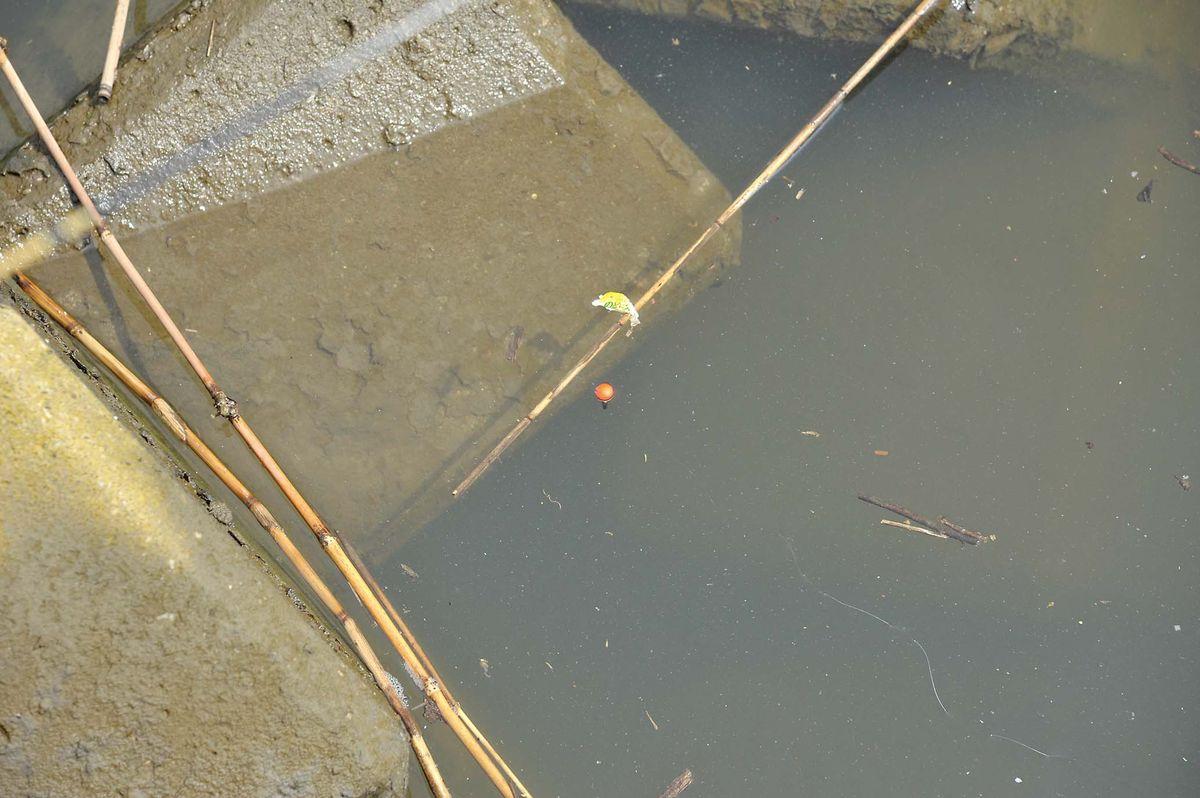 【テナガエビの釣り方】ウキは沈ませて使う