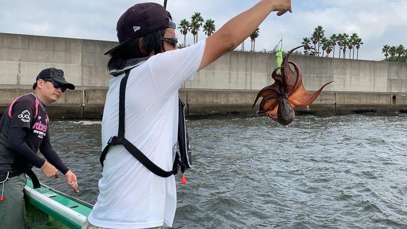 【東京湾の餌木タコ(エギタコ)入門】タコが釣れました