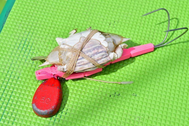 【東京湾の餌木タコ(エギタコ)入門】伝統的なタコテンヤ