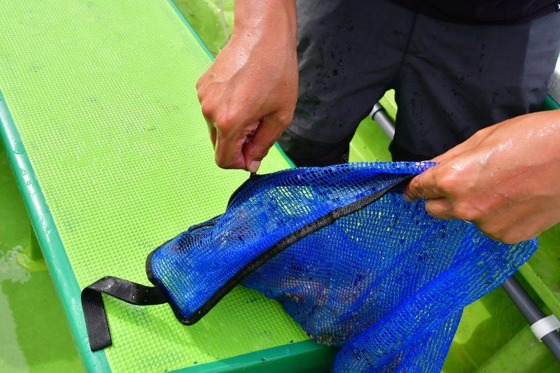 【東京湾の餌木タコ(エギタコ)入門】釣りあげたタコはネットへ入れる