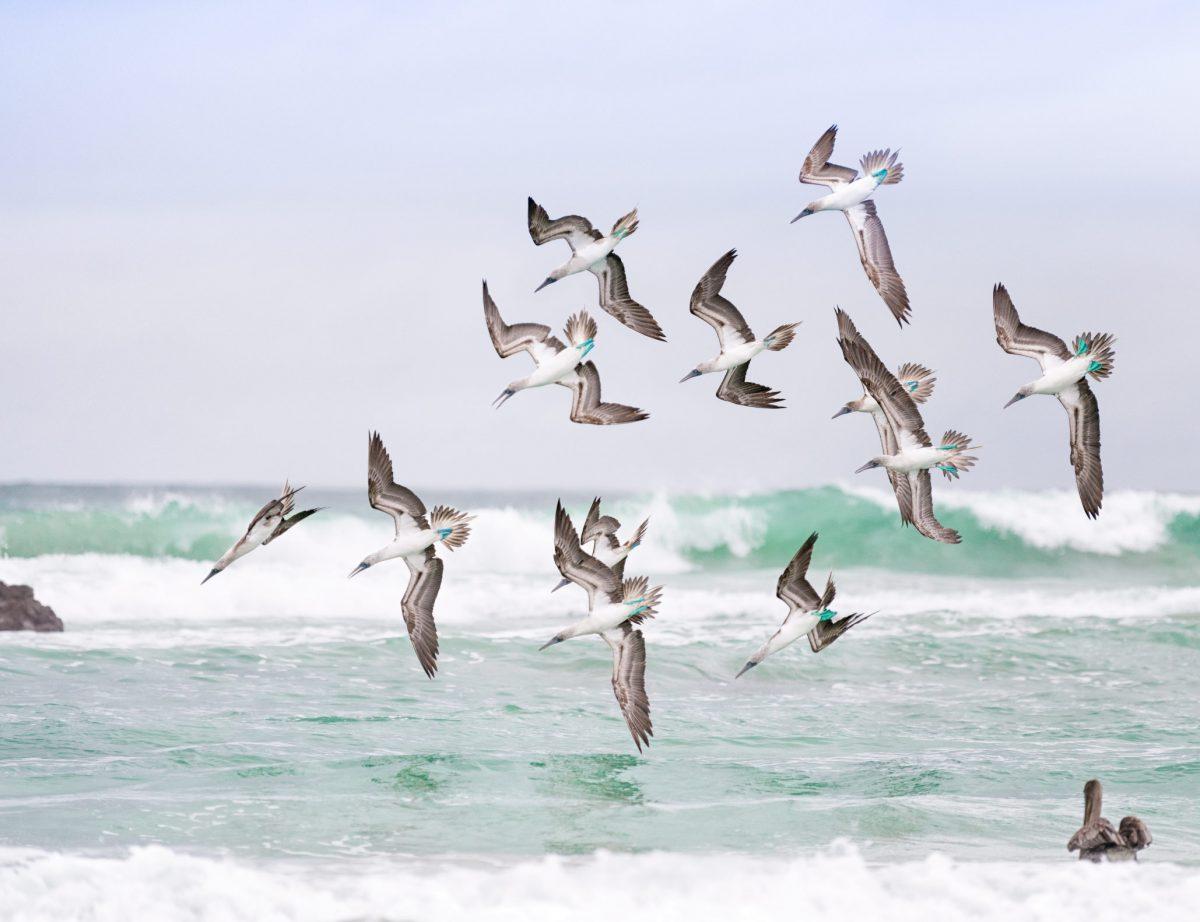 seagulls_schwa