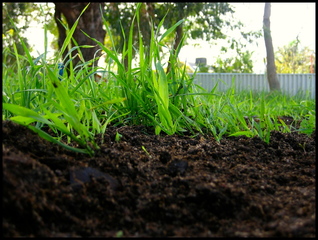 Why We Aerate And Compost Lawns Before Overseeding