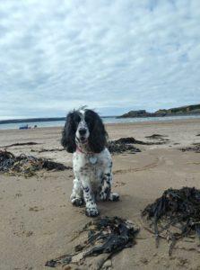 West Angle Beach, Pembrokeshire, Wales Dog friendly beach
