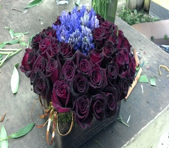 the significance of the black rose Learn about rose color meanings learn the hidden meanings of rose colors from this helpful guide.
