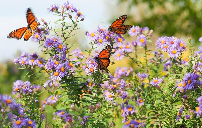 the magic of butterflies in the garden, Garten ideen