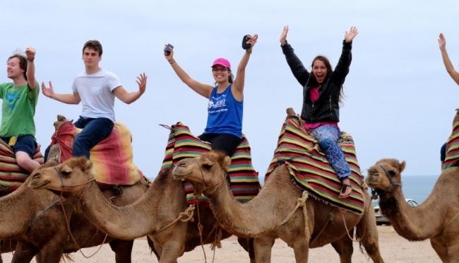 650-Turkey-camels.jpg