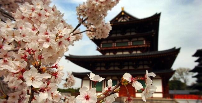Sakura Spring Celebrations in Japan
