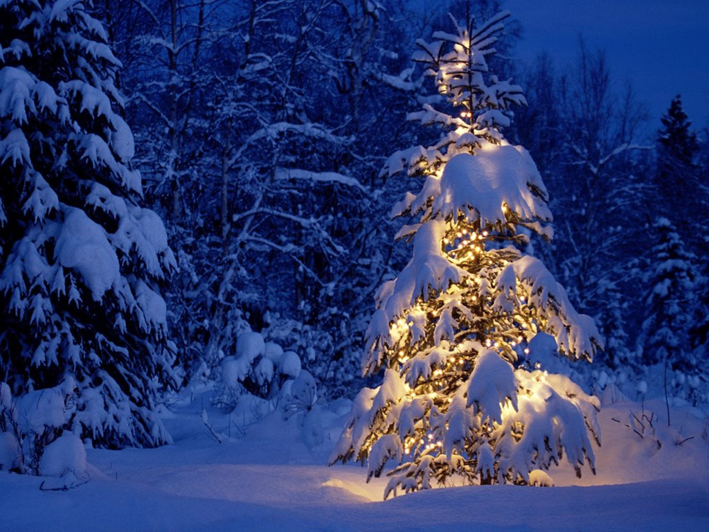 the national christmas tree association has this to say - Outside Christmas Trees