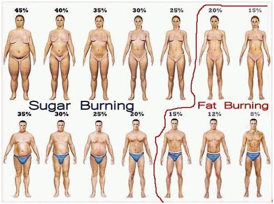 burn body fat fast xfi\/xim