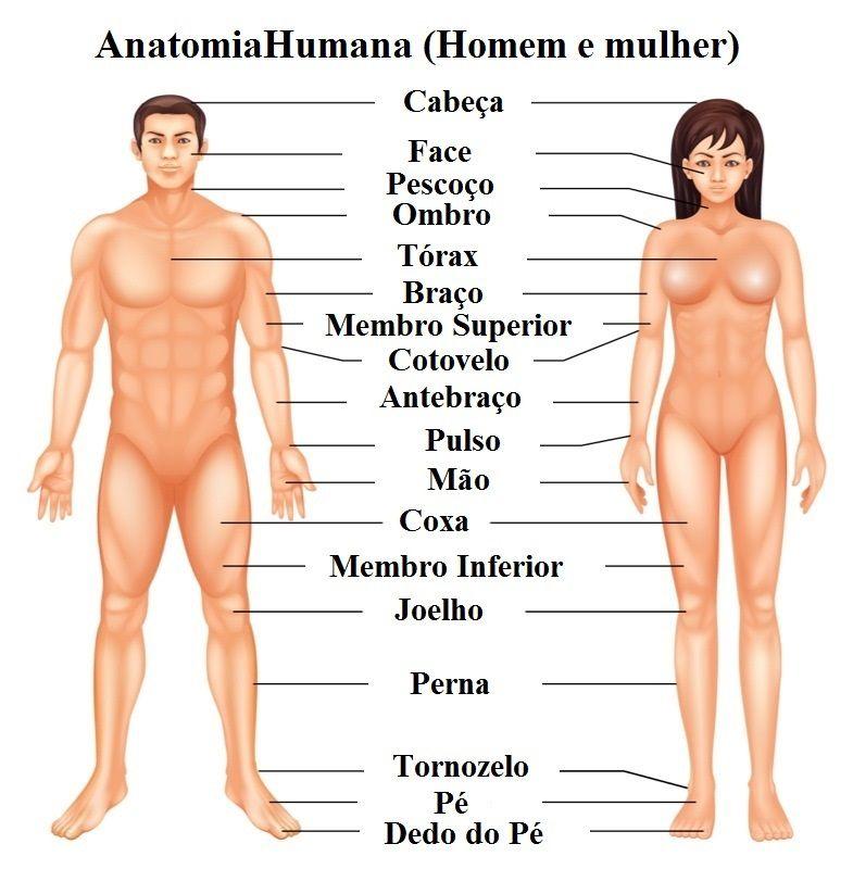 Conoce las partes del cuerpo en portugués - Universal de Idiomas
