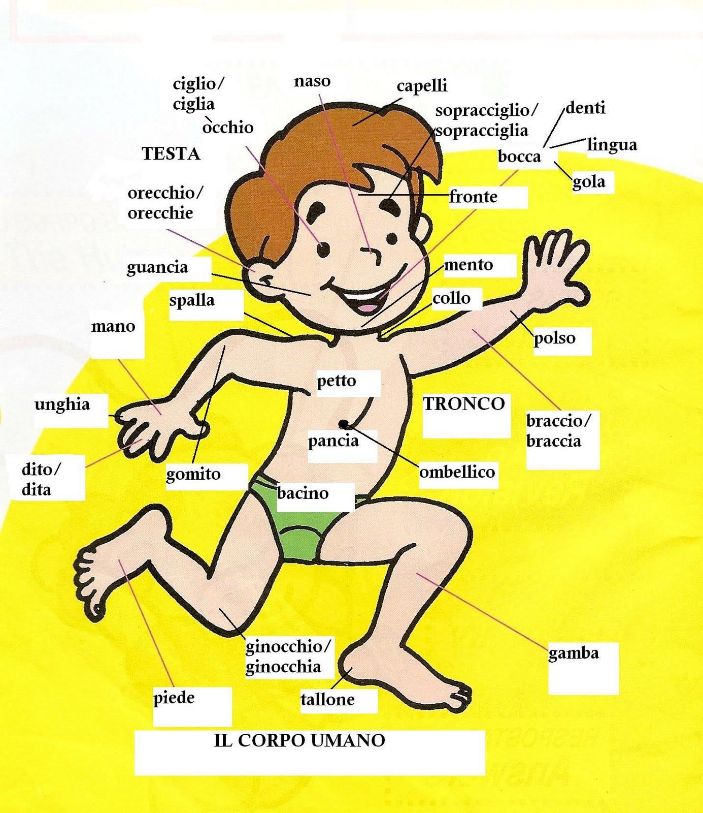 El cuerpo humano en italiano y sus sistemas - Universal de Idiomas