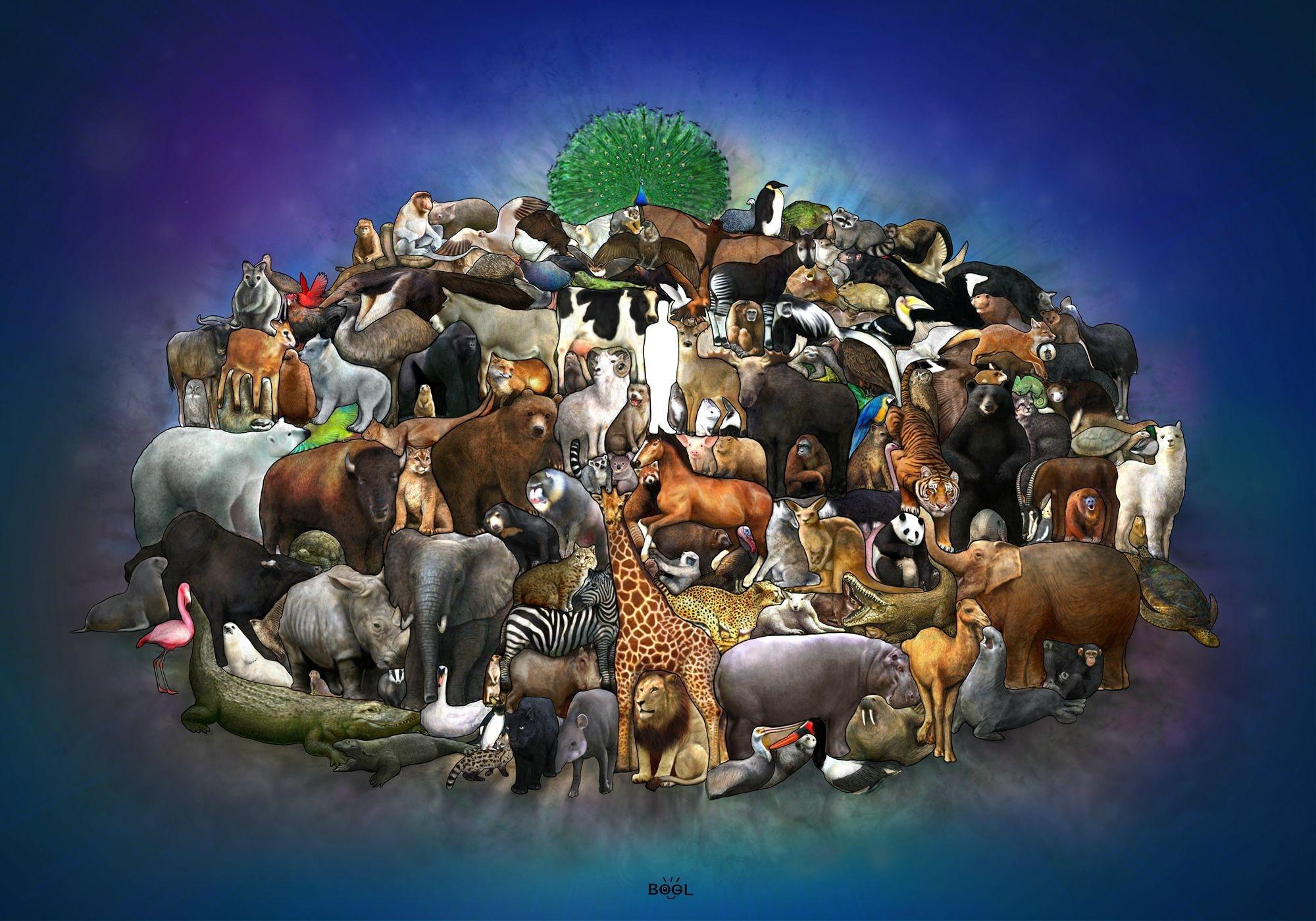 El reino animal en inglés-1.jpg