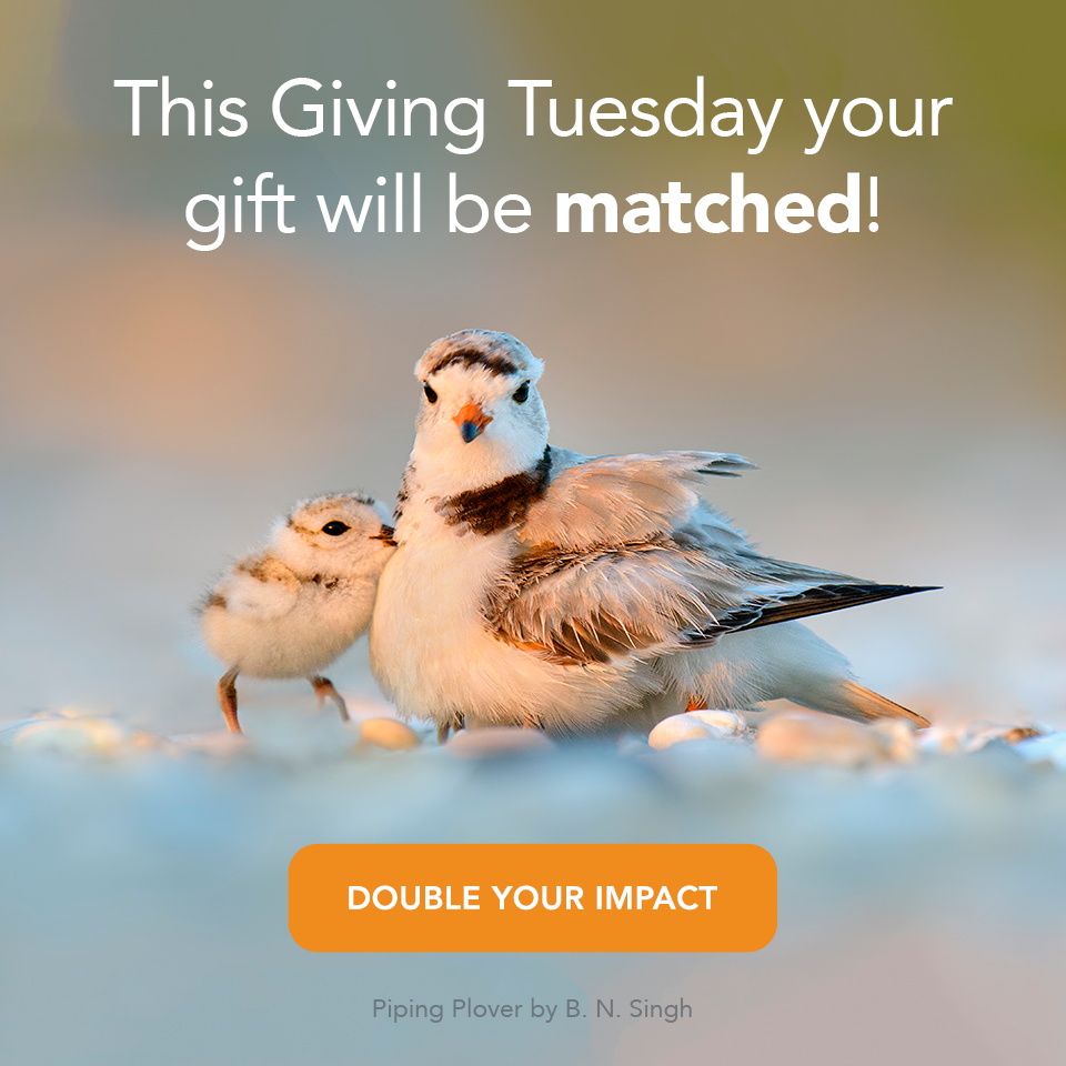 Double your Impact for birds