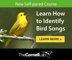 New Self Paced Course Learn How To Identify Bird Songs Click