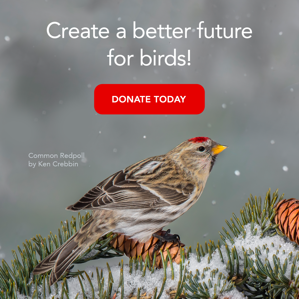 Great Gifts That Do Good: A Bird Lover\'s Guide | All About Birds