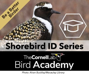 Building Skills: The 4 Keys to Bird Identification | All